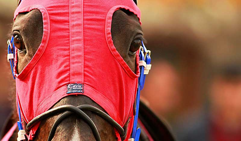 Federal Horse Racing Integrity Act Still in Limbo